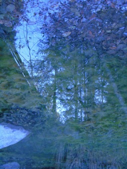 reflection17