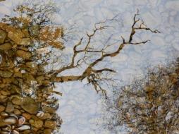 reflection4