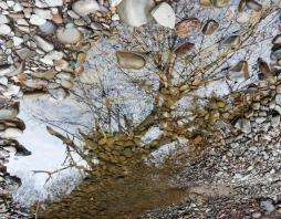 reflection8