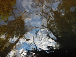 reflections11